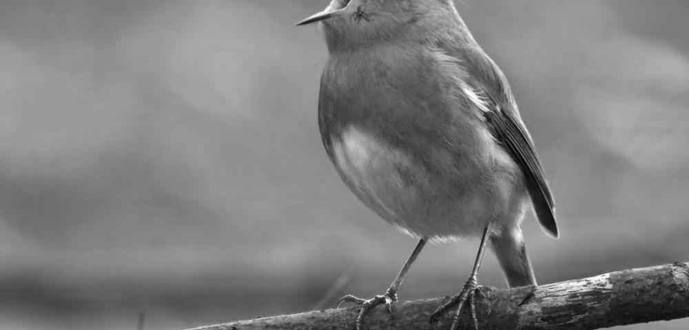 <div class='banner_marca'></div><div class='banner_title'>Las aves de Font Roja y Mariola deciden emigrar permanentemente de los parques</div><div class='banner_content'>Un divertit article de Marta Gisbert</div>