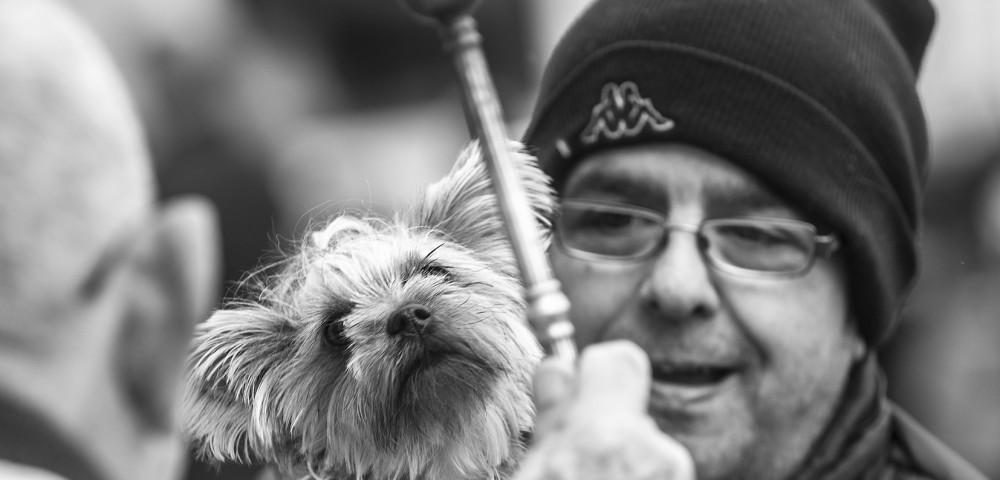 <div class='banner_marca'></div><div class='banner_title'>Benditos animales</div><div class='banner_content'>Sant Antoni y la bendición de mascotas, fotos de Paco Grau y texto de Javier Llopis</div>