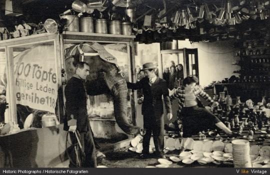 Un elefante en una cacharrería