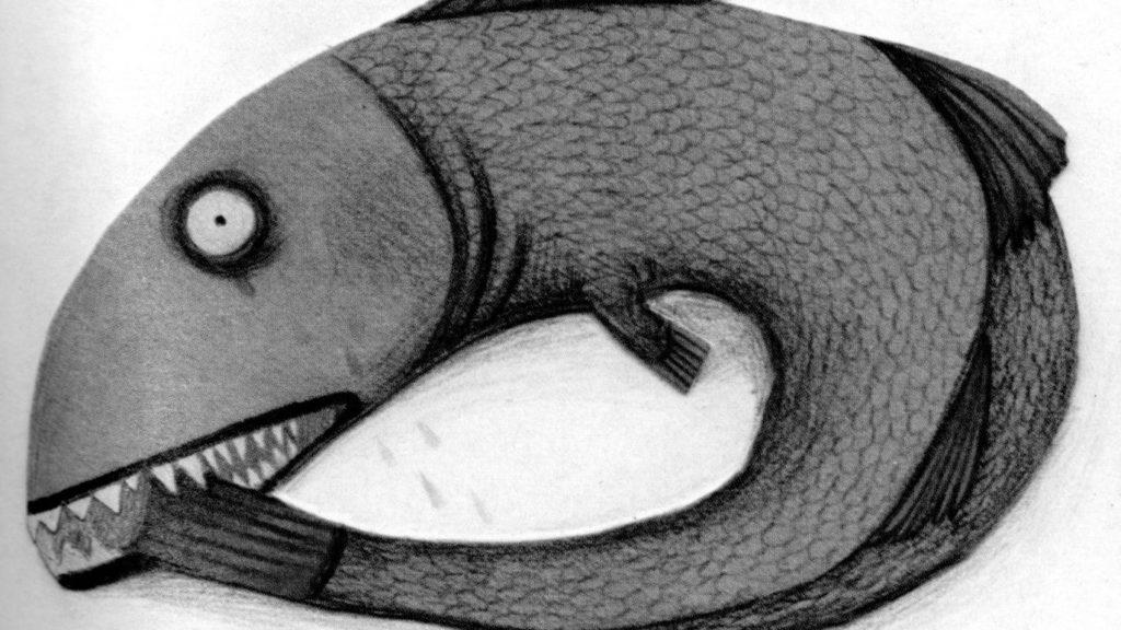 El peix i la cua