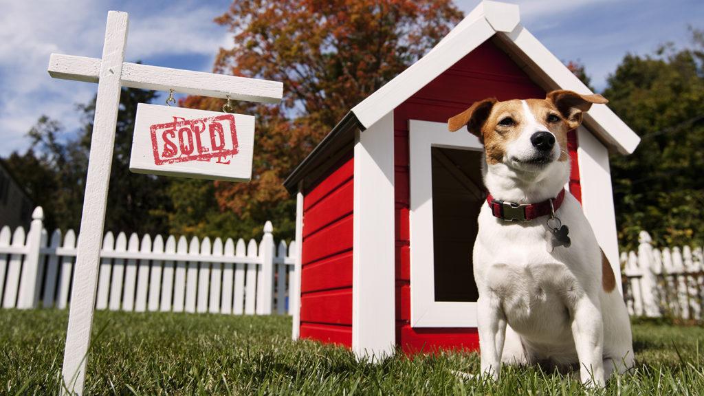 El Ayuntamiento inicia los trámites para cobrar el Impuesto de Bienes Inmuebles (IBI) a las casetas para perros