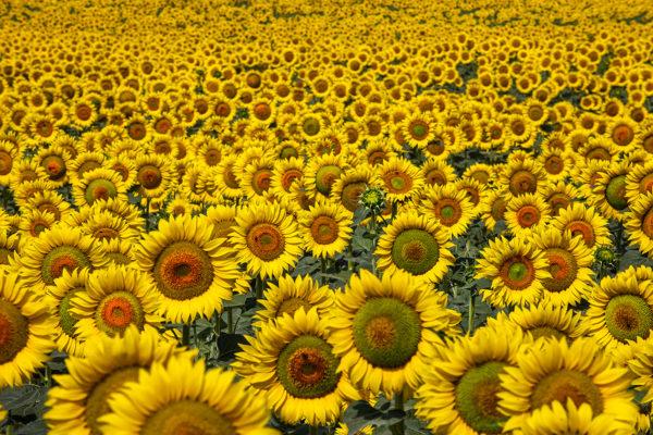 Coreografía floral
